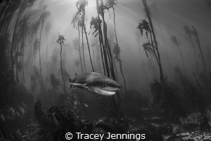 Dreamscape by Tracey Jennings