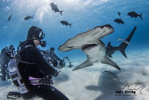 Staredown with a Great Hammerhead by Ken Kiefer
