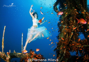 Dancing with the fishes by Plamena Mileva