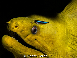Green moray by Beate Seiler
