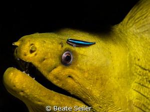 Green moray by Beate Seiler