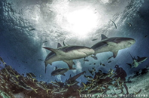 Best way to get good shark photos is to get the middle of... by Steven Anderson