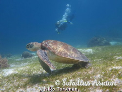 Together with turtles. Balicasag. by Niko Torvinen