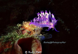 Nudis off mabul.