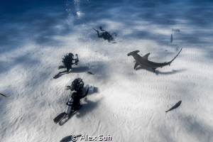 Divers photographing a Great Hammerhead Shark by Alex Suh