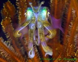 Iridescent Squid by Gabriel De Leon Jr