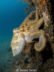 Octopus on a pillar by Beate Seiler