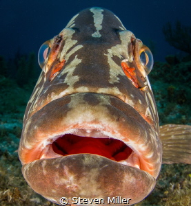 Grouper -Fingers?? by Steven Miller