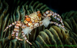 Let's go 3 Rounds"