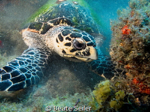 Turtle at work by Beate Seiler