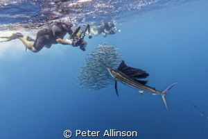 Photographer attempting to photograph a sailfish (he miss... by Peter Allinson