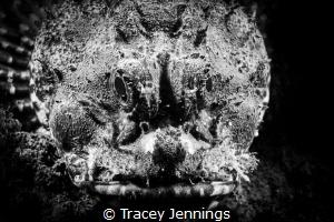 Grumpy by Tracey Jennings