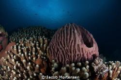 Barrel-sponge at Wakatobi Dive Resort by Jacob Mortensen