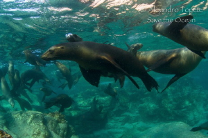 Sea Lions Family, La Paz Mexico by Alejandro Topete