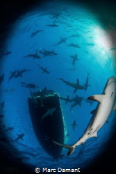 """""""Surfacing!"""" It is always advised to look up before you h... by Marc Damant"""