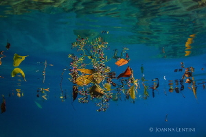 Taking a midday break from diving the crystal clear condi... by Joanna Lentini