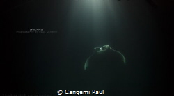 Dreams/Manta in the night by Cangemi Paul