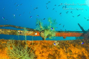 Black Coral in the Wreck by Alejandro Topete