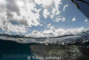 Under the waves by Tracey Jennings