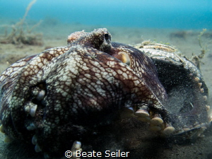 Coconut octopus by Beate Seiler