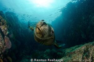 Hello youuuuu...... by Rasmus Raahauge