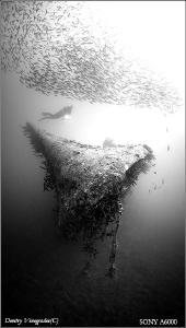 Geometry Red Sea. Egypt. El Mina wreck. 30 meters deep. ... by Dmitry Vinogradov