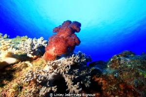 Balaclava ,Mauritius ,Northern Mauritian coast Linley Je... by Linley Jean-Yves Bignoux