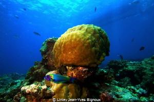 Mauritius,Balaclava Turtle Bay 7m Linley Jean-Yves Bigno... by Linley Jean-Yves Bignoux