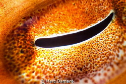 An Eye on you! The spectacular morphing, colour changing ... by Marc Damant