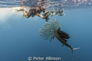 Sailfish run photo showing photographers and the fish by Peter Allinson