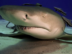 """Up Close and Personal""