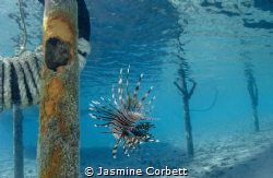 Whenever I came in for a dive I noticed this particular L... by Jasmine Corbett