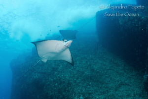 Eagle Rays in the rocqueta,Acapulco Mexico by Alejandro Topete