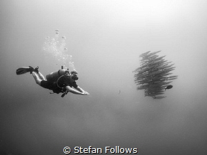 The Escort. Sail Rock, Thailand-EM5-Panasonic 8mm-iso250-... by Stefan Follows