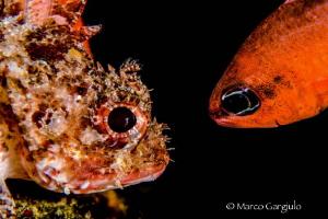 Double exposure in camera. 2012-09-08 by Marco Gargiulo