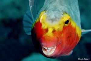 Smiley face by Raoul Caprez