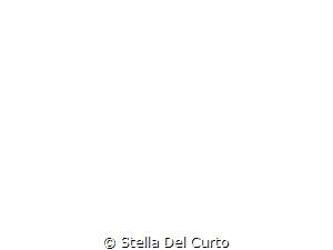 - by Stella Del Curto