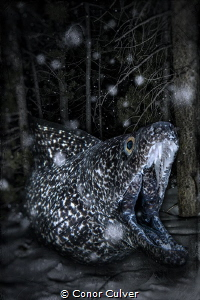 """""""Blending Into The Night And Snow"""" part of my Underwater ... by Conor Culver"""