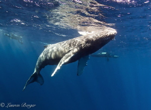 """""""The Last Breath"""". My last dive at Roca Partida in the Re... by Lauren Berger"""