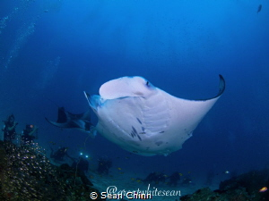 'Stars of the Show' Cleaning station with many divers in ... by Sean Chinn