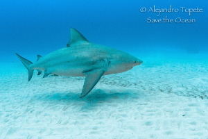 Bullshark in the sand, Playa del Carmen Mexico by Alejandro Topete