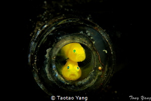 Twins by Taotao Yang