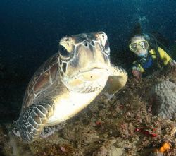 A turtle fancies the dome port- either as jelly-fish food... by Fiona Ayerst