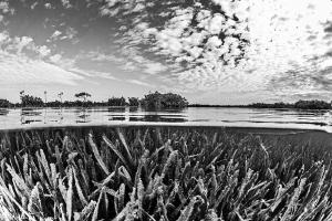B&W mangrove by Mathieu Foulquié