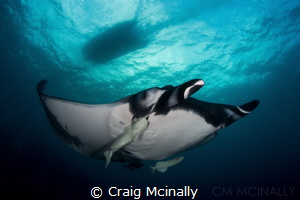 A giant manta and the zodiac tender pass going in opposit... by Craig Mcinally