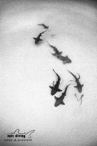 Ain't no party like a Nurse Shark Party!! by Ken Kiefer