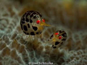 Bugs life by Uwe Schmolke