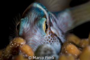 Hiding Tobi by Marco Fierli