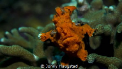 This image was taken in Moalboal Philippines. It was the ... by Jonny Haugstad