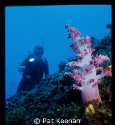 magnificient soft coral growth on the wreck of the Korean... by Pat Keenan